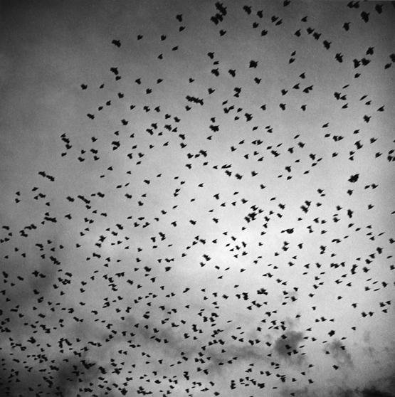 Pájaros II / Birds II