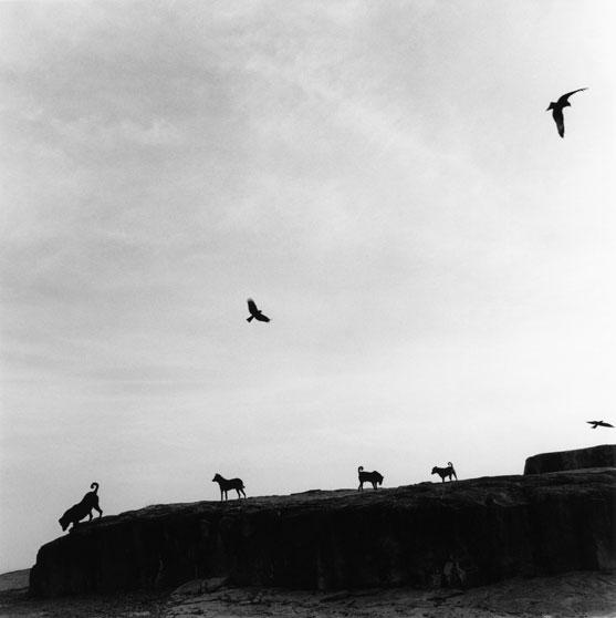 Perros perdidos, India, 1997